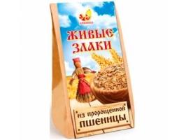 Живые злаки из пророщенной пшеницы